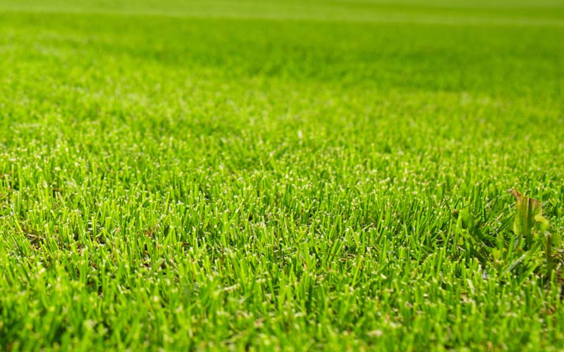 Grass field (extra small)