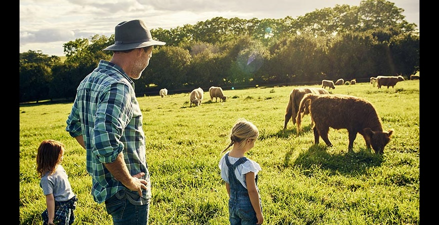 image of a man and two young kids looking at a field of cattle