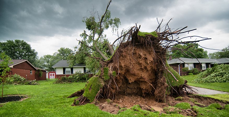 Tree uprooted in front lawn.